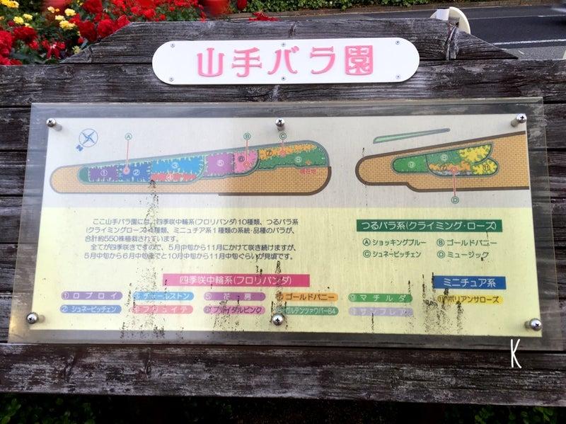 神戸 バラ 園