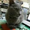 猫さんと一緒に快適に暮らしたいvol.6の画像