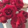 ロンドンより バラの季節が来ましたね~の画像