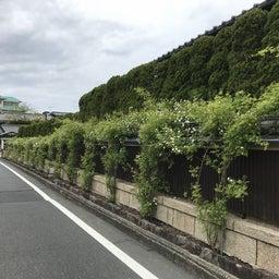 画像 海花亭前のツルバラが咲き始めました♪ の記事より 1つ目