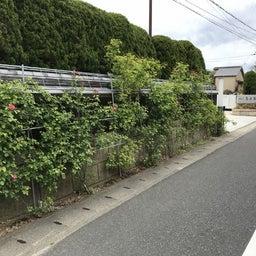 画像 海花亭前のツルバラが咲き始めました♪ の記事より 4つ目