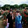 京成バラ園☆の画像
