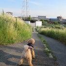 16日の夕方散歩ですよ。の記事より