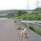 17日の夕方散歩は、ロングコースでカワウがいたよ。の記事より