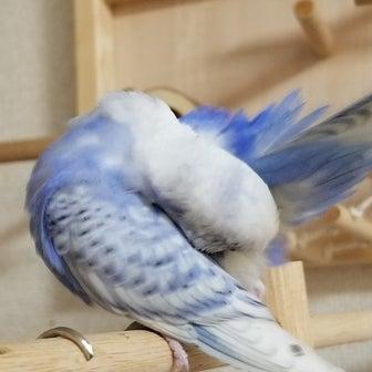 カデナの美しき羽