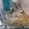 【PET PLEX日吉店】ロボさんたちの画像