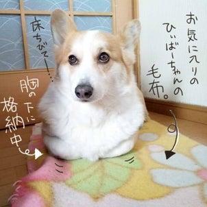 箱座り…みんな(犬)もする?の画像