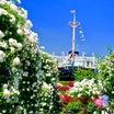 横浜山下公園のバラはたった3秒で人を○○と女子を○○