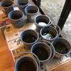 お庭でお米作りプロジェクト♪大雨&強風注意報が出たーっ‼️の画像