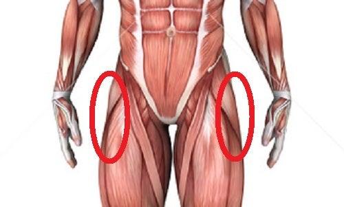 大 転 子 筋肉
