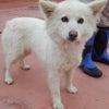《2019年度》5月15日福島県動物愛護センター本支所&福島市収容犬の画像