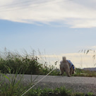 21日の夕方散歩です。の記事より