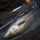 釣りの真髄。の記事より
