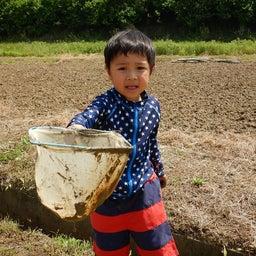 画像 田んぼで泥んこ遊びをしよう!(2019/05/24) の記事より 14つ目