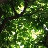 色で心と体をケアするコラムVol.7「職場環境を快適にする緑!」の画像