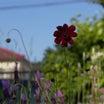 次々に開花 嬉しい季節だよ~