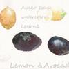 初めての水彩画 レモンとアボカドを描く 無料水彩レッスンその2の画像