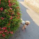 26日の朝散歩は、超ロング散歩に!の記事より