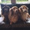 美人三姉妹とチビちゃんずの画像