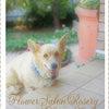 シニア犬と暮らす日々・・の画像