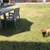 お庭で事務処理をする訳の画像