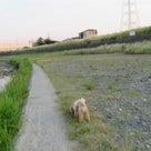 26日の夕方散歩です。の記事より