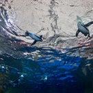 京都水族館、のんびりしたい時にぴったりです。の記事より
