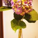 「紫陽花」と「チキン野菜カレー」♪ Hydrangea & Chicken Curryの記事より