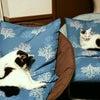 猫たちの特等席!*今日もありがとうございました*の画像