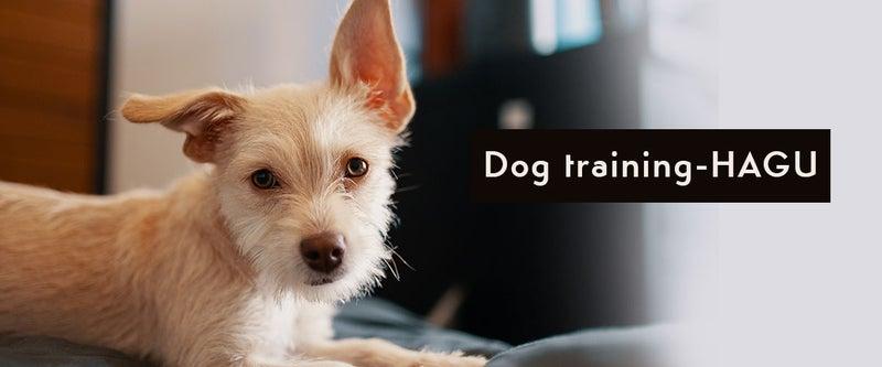 犬アレルギー症状が出にくい犬種 出やすい犬種 犬のしつけハグ Dog Hagu