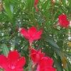近寄る事も止めた方が良い美しい花の画像