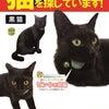 おきめちゃん、8日ぶりに無事帰宅!【京都】【黒猫】【女の子】【首輪あり】【不思議なジンクス】の画像