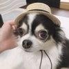 プライベート犬♫の画像