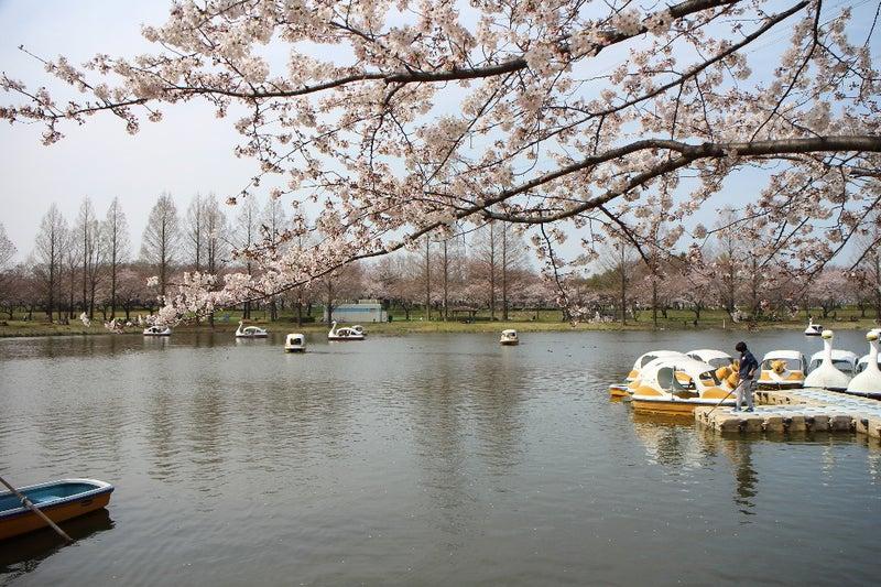 川越 水上 公園 駐 車場