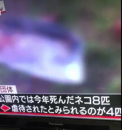 うるま 市 ニュース