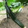 デイサービス 菜園は毎日が収穫期の画像
