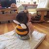 AmazonCMのミツバチ♪の画像