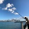 久しぶりにデボンポートでサビキ釣りの画像