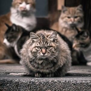 猫との関係性 家族との関係性の画像