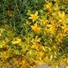 収穫の春の画像