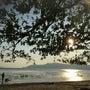 タマンネガラ