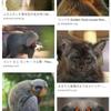 新種の猿の画像