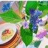 ローフード、ビーガン、グルテンフリー料理教室、熊本の画像