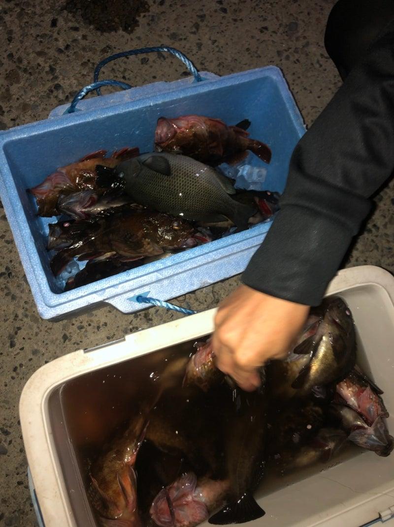 明日14日(金)シロギス、午後シーバス、午前黒鯛空きあります!