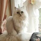 美味しいパスタランチ 紫陽花フラワーアレンジ 猫 乳がん 湯着 温泉タオルン プリンセスのんの の記事より