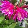 サトイモ、水生植物、タマシダ、火祭り、ゼラニウム、朧月、アイビー、クジャクサボテン、キチジョウソの画像