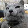 猫さんと一緒に快適に暮らしたいvol.7の画像