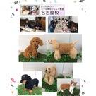 6月、名古屋教室 その2  きりのみりいリアル羊毛フェルト教室の記事より