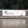 明治神宮で早朝散歩♪菖蒲祭りは雨の日を狙うべしの画像