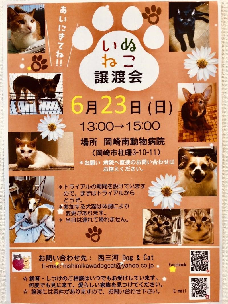 今度の譲渡会は子犬と子猫が参加予定です | 西三河 Dog & Cat 岡崎市